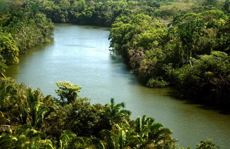 Projekt Kongo Isangi Forest