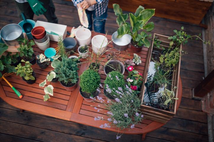 Urban Gardening Gärtnern in der Stadt